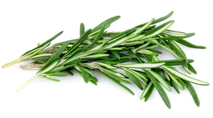 Rosemary Herb Nutrition – Know more about its fact and uses