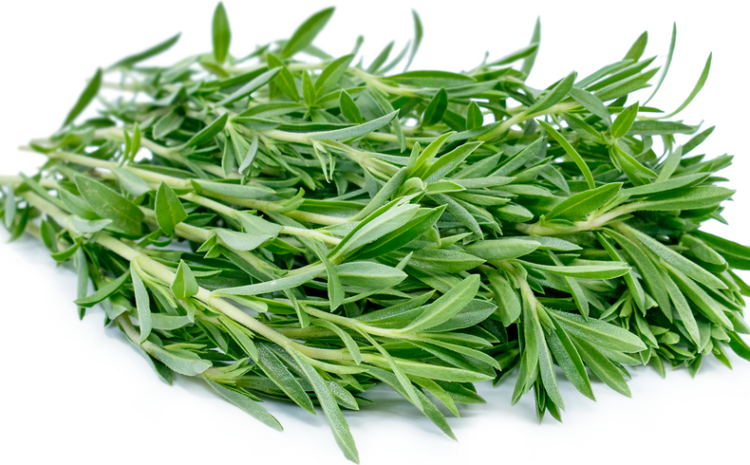 Summer Savory Herb Nutrition Facts -know about its benefits and uses