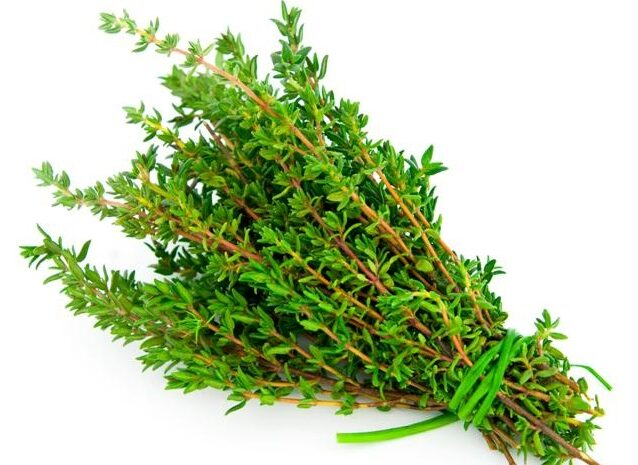Thyme Herb Nutrition Facts -know more about its benefits and uses